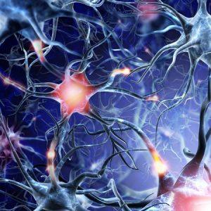 Consumo energético cerebral